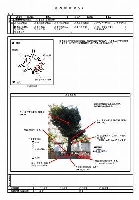 """樹木診断カルテ"""" border="""
